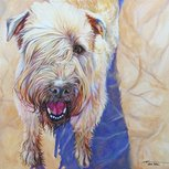 Devon dog portrait by artist Kate Green