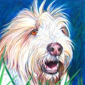 Dog portrait by artist Kate Green